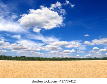 Blue sky with a clouds over the field wheat in period harvest