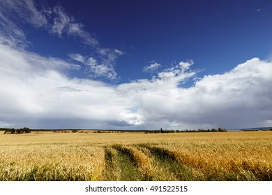 Blue sky and clouds over golden corn field