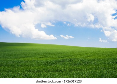 Blue sky with clouds over a green field with young wheat. Travel Ukraine.