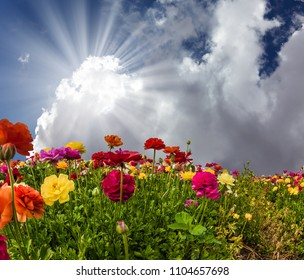 The blue sky and cumulus clouds are illuminated by the warm spring sun. Multi-colored flowers on high stalks are shaken on easy spring wind. The concept of artistic photography