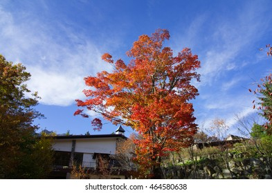 Blue Sky and Fall foliage at Shinhotaka Japan
