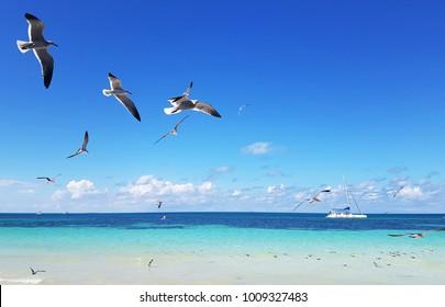 Blue sky, flying gulls