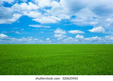 Blue Sky and Green Field Landscape