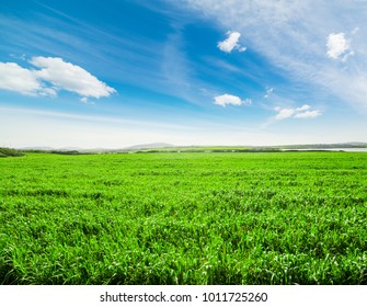 Blue sky and green field in the springtime, Sardinia