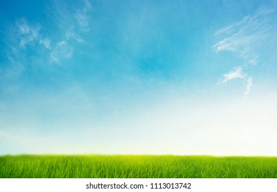 Blue sky with green grass Background