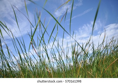 blue sky and green grass and beautiful clouds