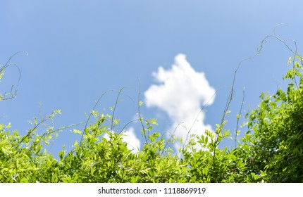 Blue sky with green plant for background