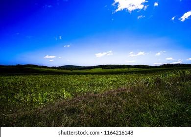 blue sky in the meadow