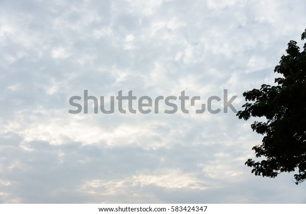 Blue sky in more cloud day and abstract background with silhouette tree.