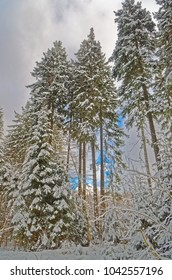 Blue sky over forest in a winter, Harz mountains national park, Germany