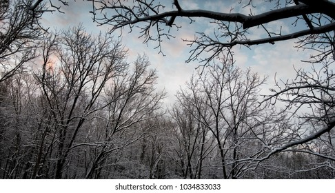 blue sky over snow covered forest