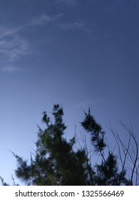 Blue sky and pine leaves