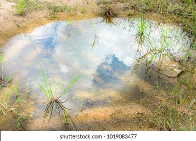 The blue sky in the puddle