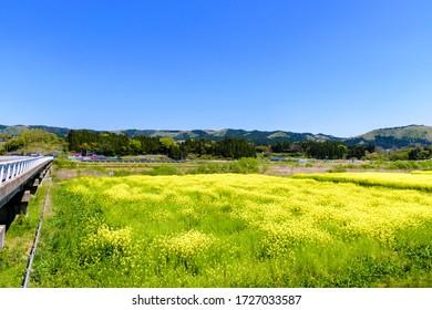 Cielo azul y campo de violación Naruko