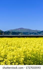Blue sky and rape field Naruko