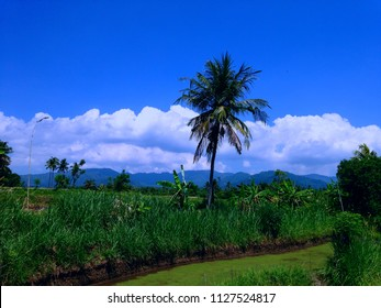 Blue Sky Ringdikit Rice Field Scenery North Bali, Indonesia