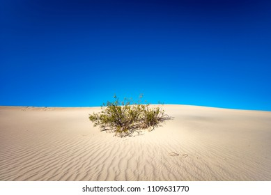 Blue Sky, Sand and a lone Shrub - Death Valley, California, USA