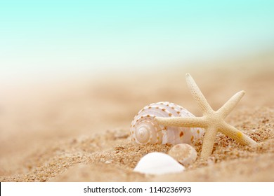 blue sky, sandy beach, shell and sea star for relaxing, summer, holiday and travel concept background