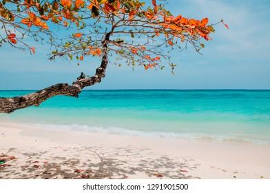 blue sky and sea. Koh Rok island, Krabi, Thailand