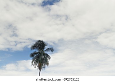 Blue sky with single coconut tree.