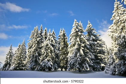 Blue sky with snow on trees