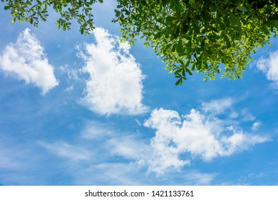 Blue sky in summer day, view from under fresh green tree leaves to bright blue sky with cloud.