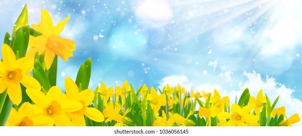 Blue sky, sunshine, daffodils, Bokeh