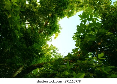 blue sky through the green leaves