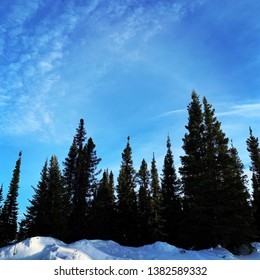 Blue sky and trees in winter