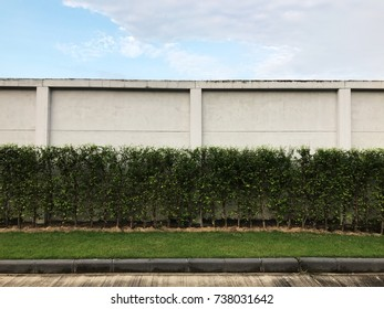 Blue Sky and white cloud above the white wall and green trees
