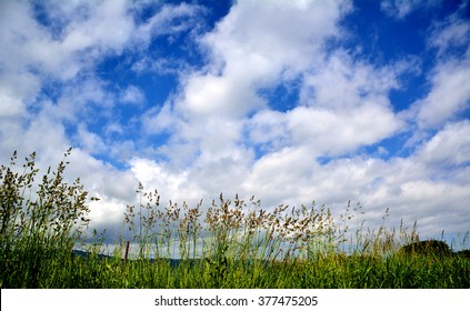 blue sky, white cloud and orchard grass in summer
