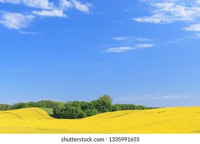 Blue sky with white clouds over landscape with rapeseed field in spring in Schleswig-Holstein, Germany. Nature Background