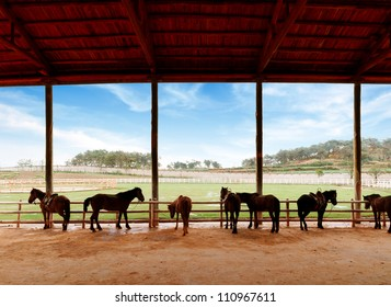 Blue sky and white clouds, stables and horses.