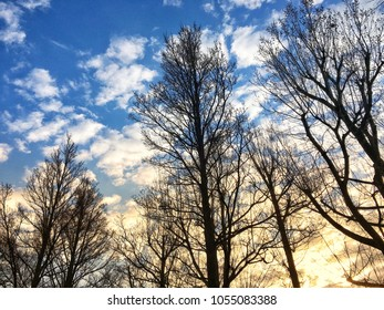 blue sky a lot of white fluffy clouds and trees and trees. Nature natural outdoor scenery skyscape cloudscape dramatic morning scene in spring