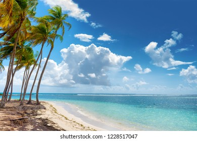 Blue sky,coconuts trees,  turquoise water and golden sand, Caravelle beach, Saint Anne, Guadeloupe, French West Indies.