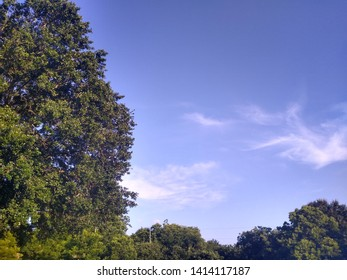 Blue Skys with lush green trees