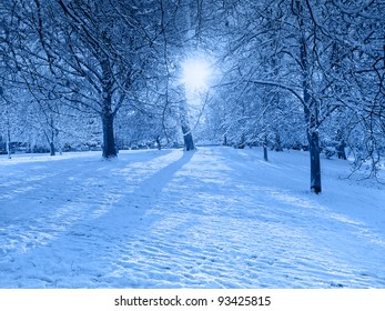 Blue Snow Scene with Light Shafts through Trees