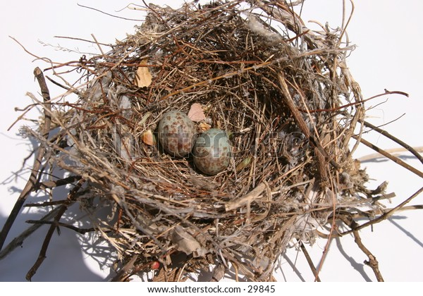 blue sparrow eggs in a bird nest on a white background