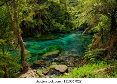 Blue Spring, the cleanest river in New Zealand, Te Waihou Walkway, Hamilton, Waikato