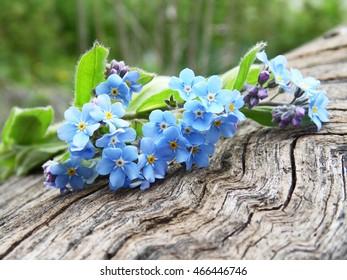 Blue spring flowers on a log