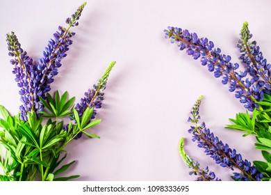 Blue spring lupines on a violet background. Top view, flat lay