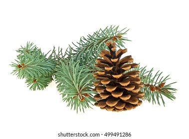 Blue spruce twig with cone isolated on a white background. Christmas decoration.