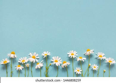 Blue summer background with daisies, copy space