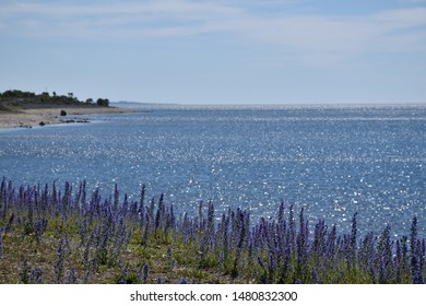 Blue summer flowers by reflecting water by the coast of the Baltic Sea