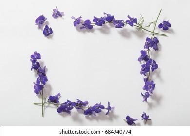 blue summer flowers on white background