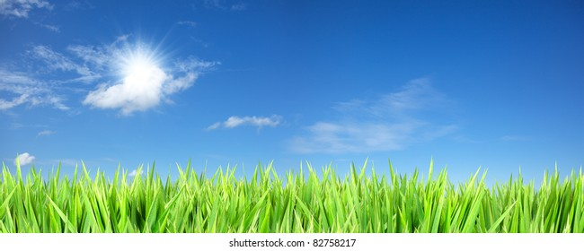 Blue sunny sky and green grass background. Panoramic composition in high resolution.