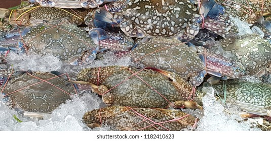 Blue Swimming Crab in market