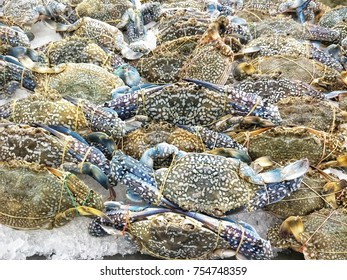 Blue swimming crab on ice bucket sold in the market