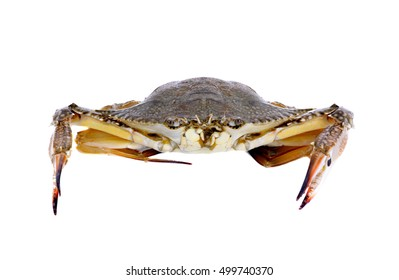Blue Swimming Crabs isolated  on white background