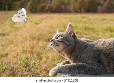 Blue tabby kitty cat watching a white butterfly